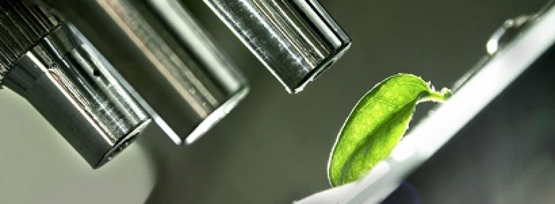 Logran eliminar envío de residuos a los vertederos